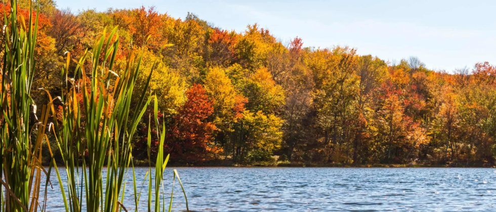 Lake with Fall Foliage Trees