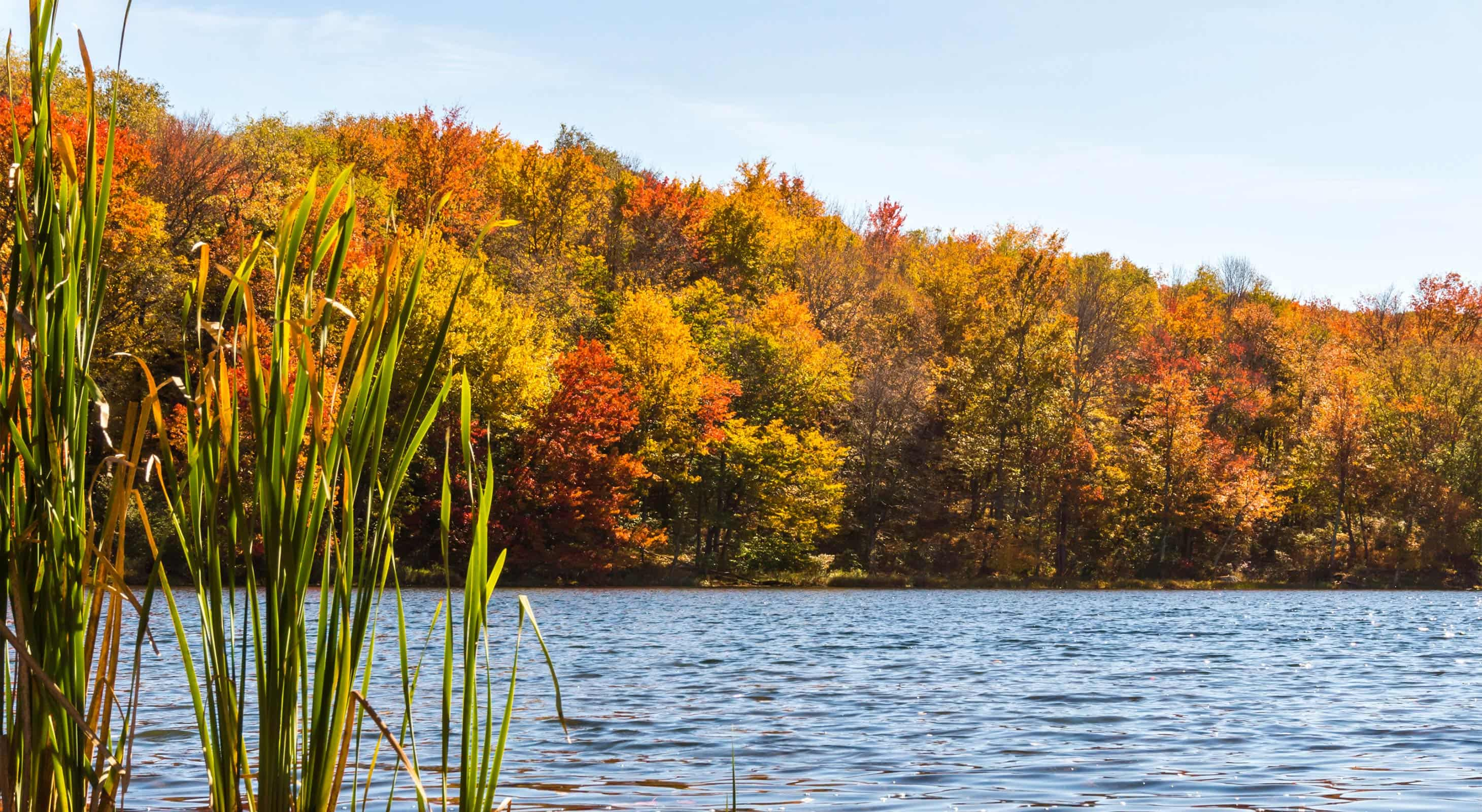 Lake with Fall Foliage Trees