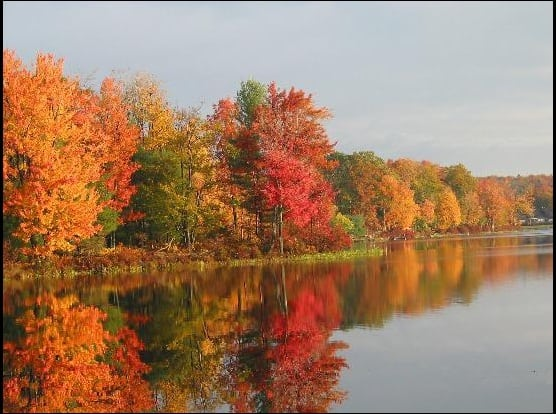 Trees in fall colors around the lake