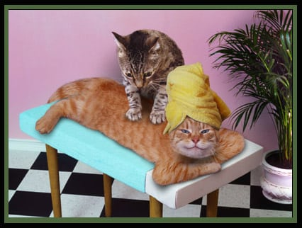 Massage cats