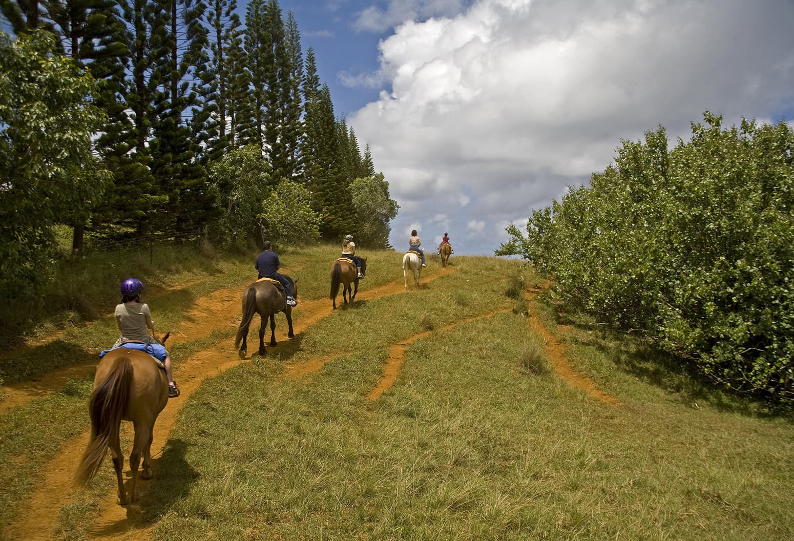 Group of people riding horses on a trail
