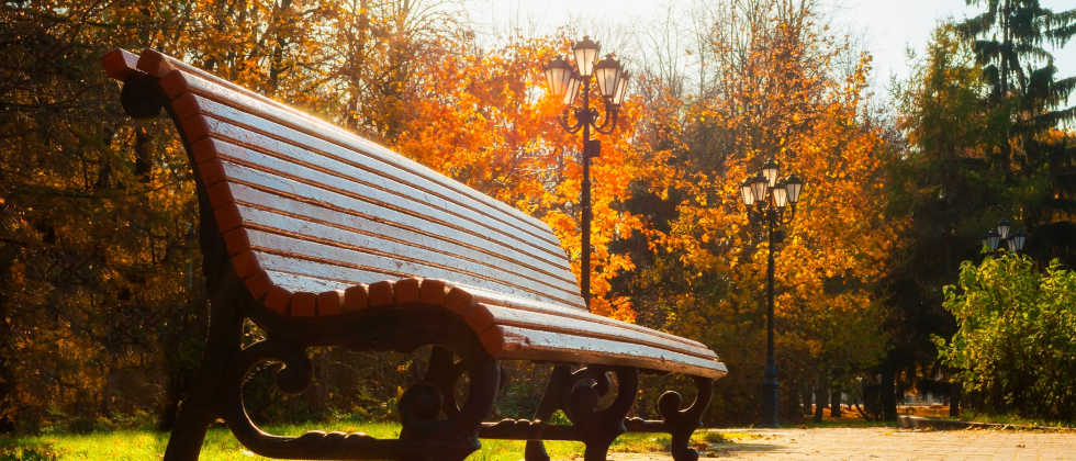 a park bench under fall foliage