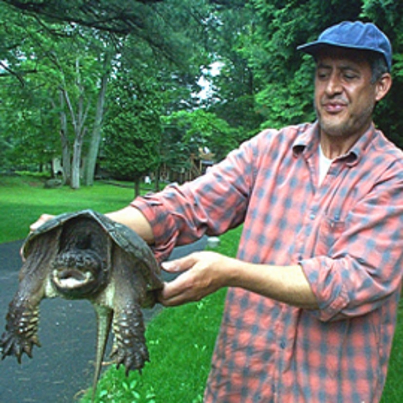 Turtle New 828